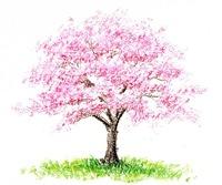 桜イラスト素材