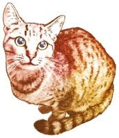 猫イラスト素材