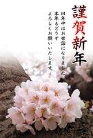 桜の花の写真年賀状